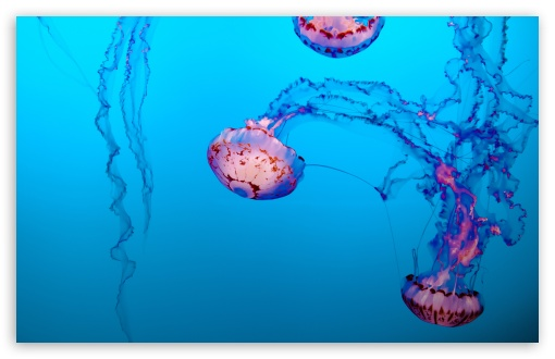 jellyfish underwater 4k hd