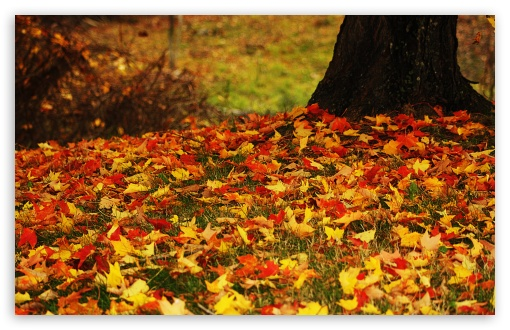 Red Fall Leaves Iphone Wallpaper Red And Yellow Autumn Leaves 4k Hd Desktop Wallpaper For