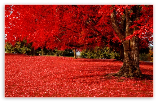 Fall Wallpaper Dual Monitor Red Autumn 4k Hd Desktop Wallpaper For 4k Ultra Hd Tv
