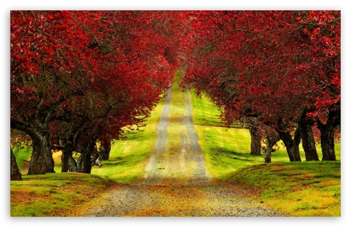 1440p Fall Wallpaper Red Foliage Trees Road 4k Hd Desktop Wallpaper For 4k
