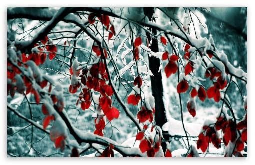Fall Leaf Wallpaper For Mobile Snow Covered Red Tree 4k Hd Desktop Wallpaper For 4k Ultra