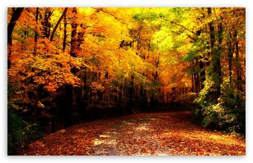 Fall 1080p Wallpaper Wisconsin Autumn 4k Hd Desktop Wallpaper For 4k Ultra Hd
