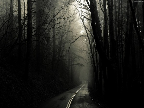 Dark Gothic Forest Wallpaper