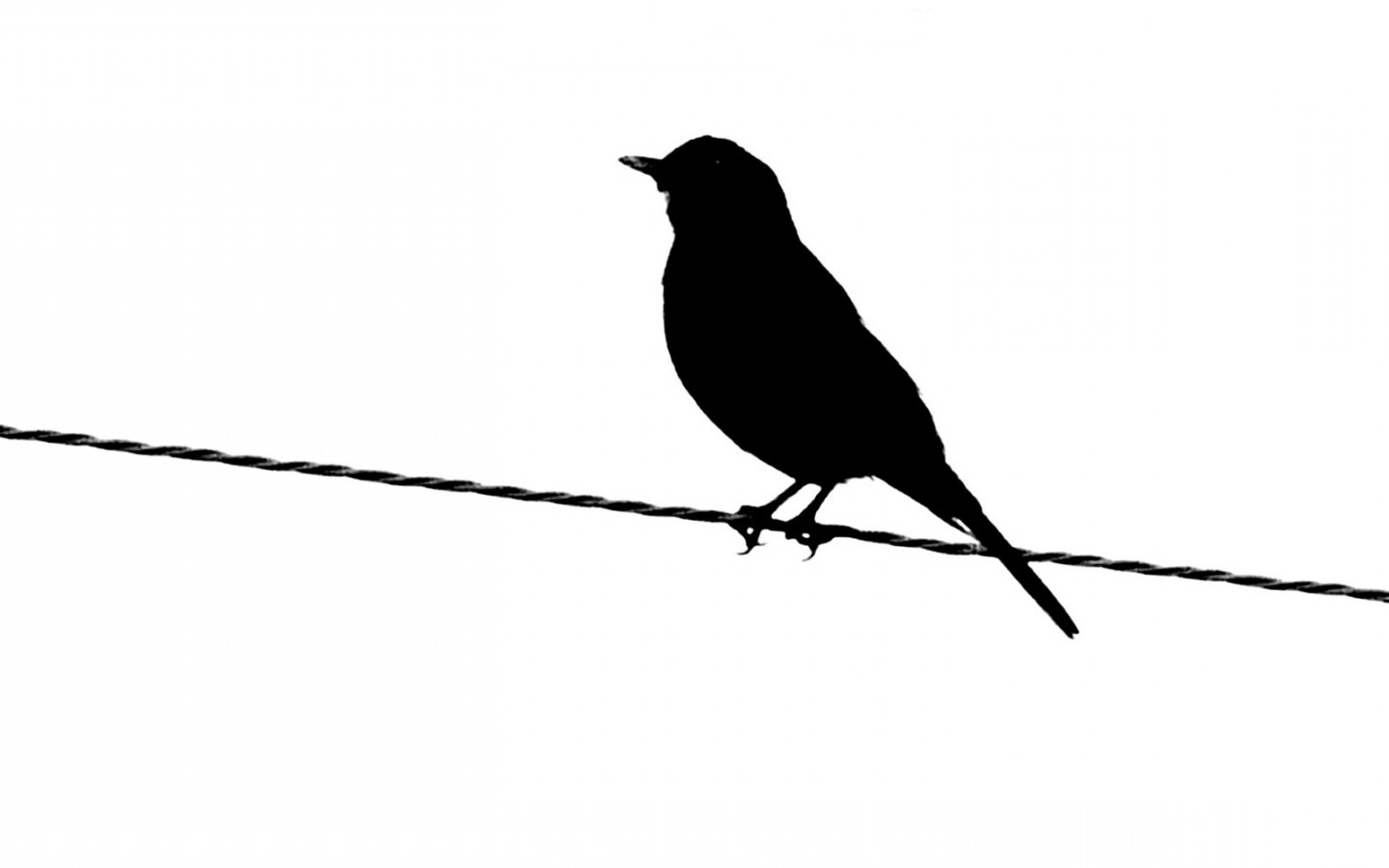Black And White Images Of Birds 24 High Resolution