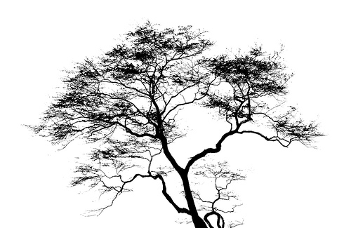 Optical Illusion Wallpaper Iphone X Black And White Images Of Trees 35 Wide Wallpaper