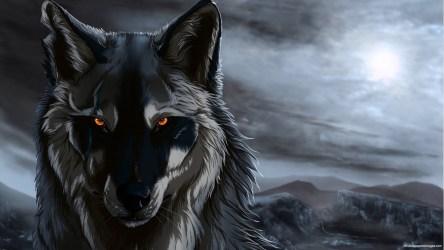wolf anime resolution wide hd hdblackwallpaper