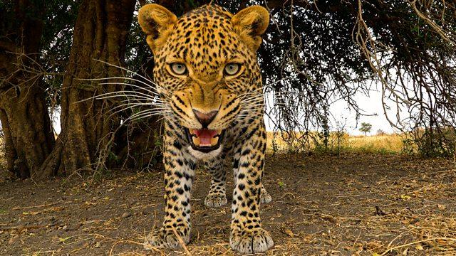 Serengeti episode 4