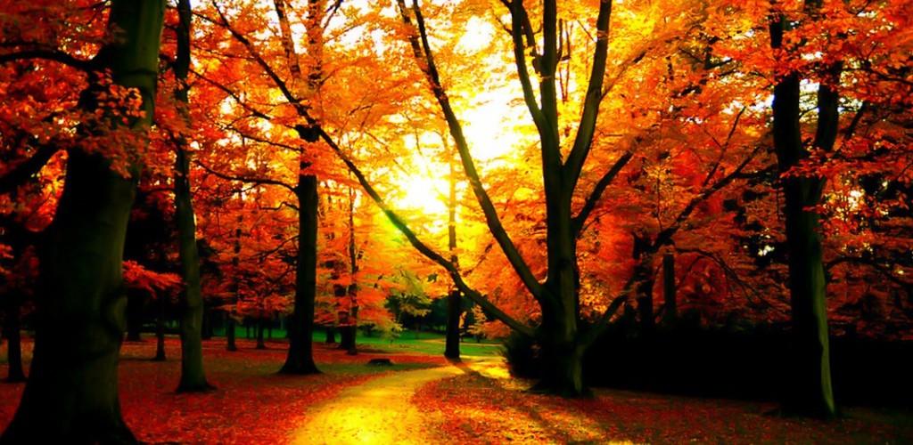 Free Fall Screensavers Wallpaper Fall Wallpapers Sunshine Hd Desktop Wallpapers 4k Hd