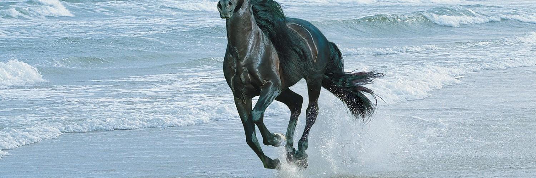 Cute Wallpapers Horse Wallpapers Black Water Hd Desktop Wallpapers 4k Hd