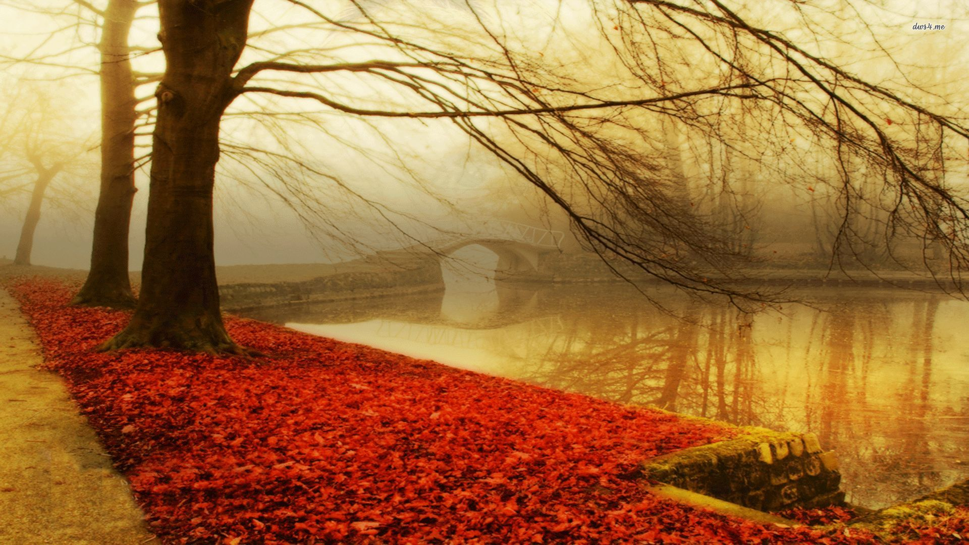 Cool Wallpapers For Fall Trees Wallpapers Autumn Hd Desktop Wallpapers 4k Hd