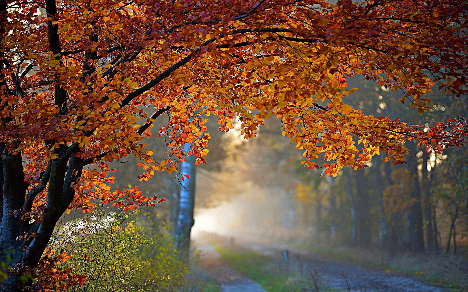 Water Falling Live Wallpaper Download Autumn Foliage Road Hd Desktop Wallpapers 4k Hd