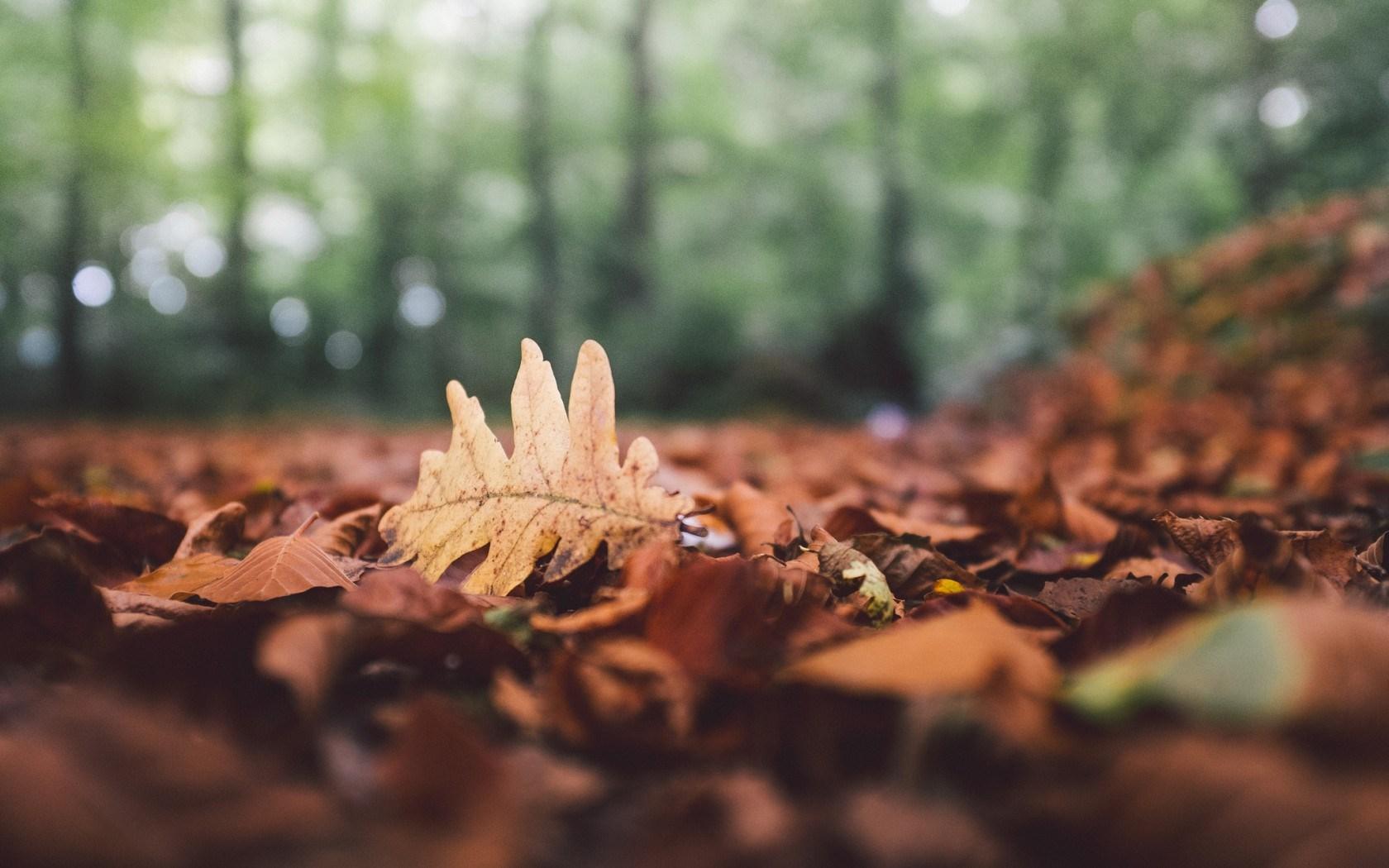 Fall In Love Leaf Wallpaper Autumn Forest Wallpaper Hd Desktop Wallpapers 4k Hd
