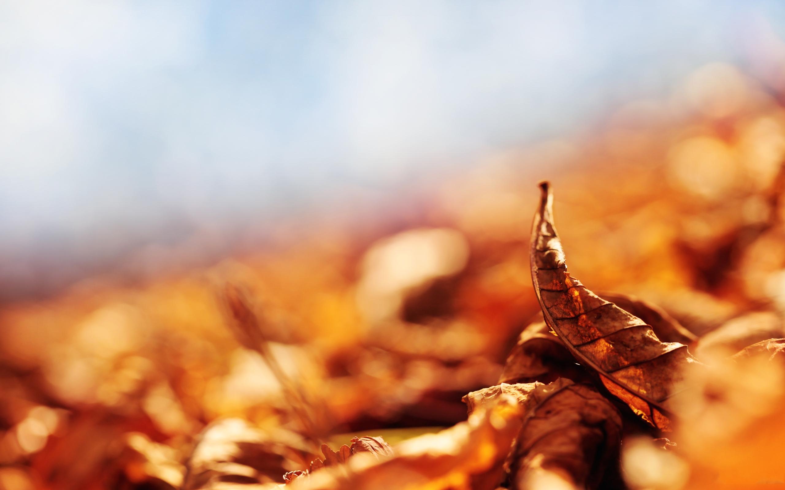 Fall Leaves Desktop Wallpaper Backgrounds Autumn Leaf Brown Hd Desktop Wallpapers 4k Hd