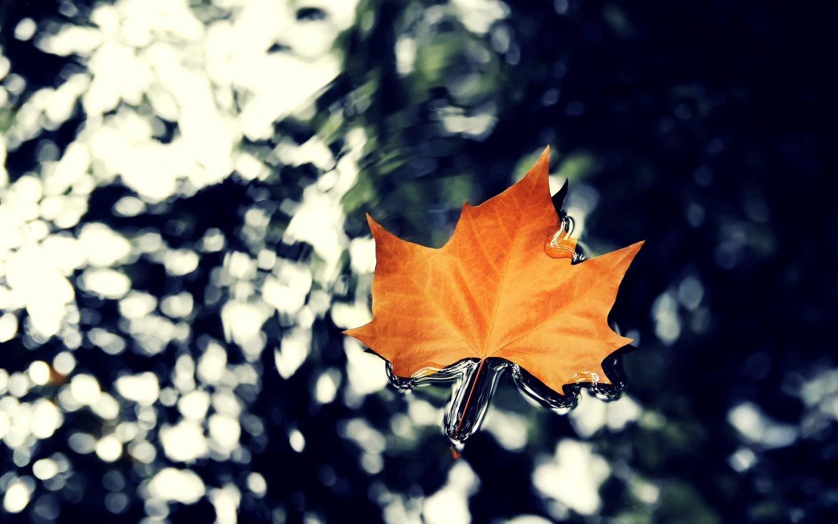 Water Falling Leaves Live Wallpaper Download Autumn Leaf Nature Stunning Hd Desktop Wallpapers 4k Hd