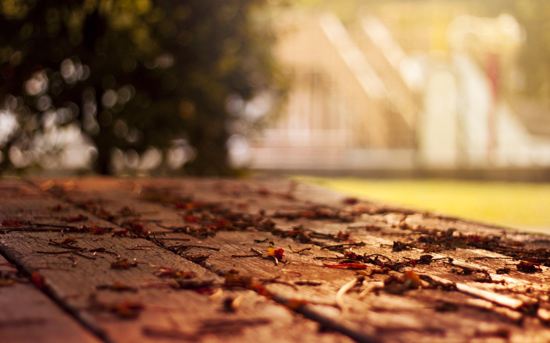 Free Fall Harvest Wallpaper Autumn Leaves Nature Macro Hd Desktop Wallpapers 4k Hd