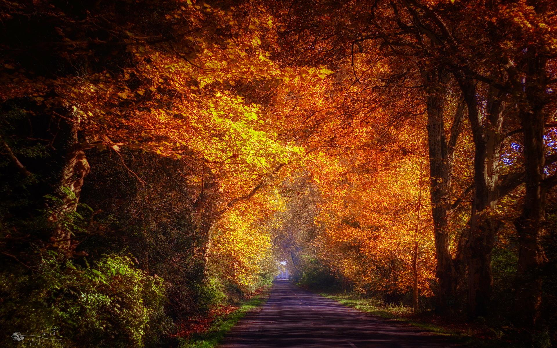 National Geographic Wallpaper Fall Foliage Autumn Road Morning Hd Desktop Wallpapers 4k Hd
