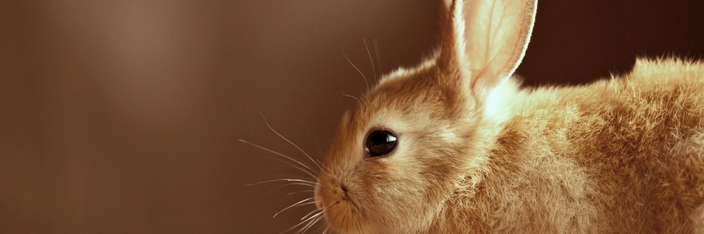 Cute Rabbits Wallpapers Hd Brown Bunny Rabbit Cute Hd Desktop Wallpapers 4k Hd