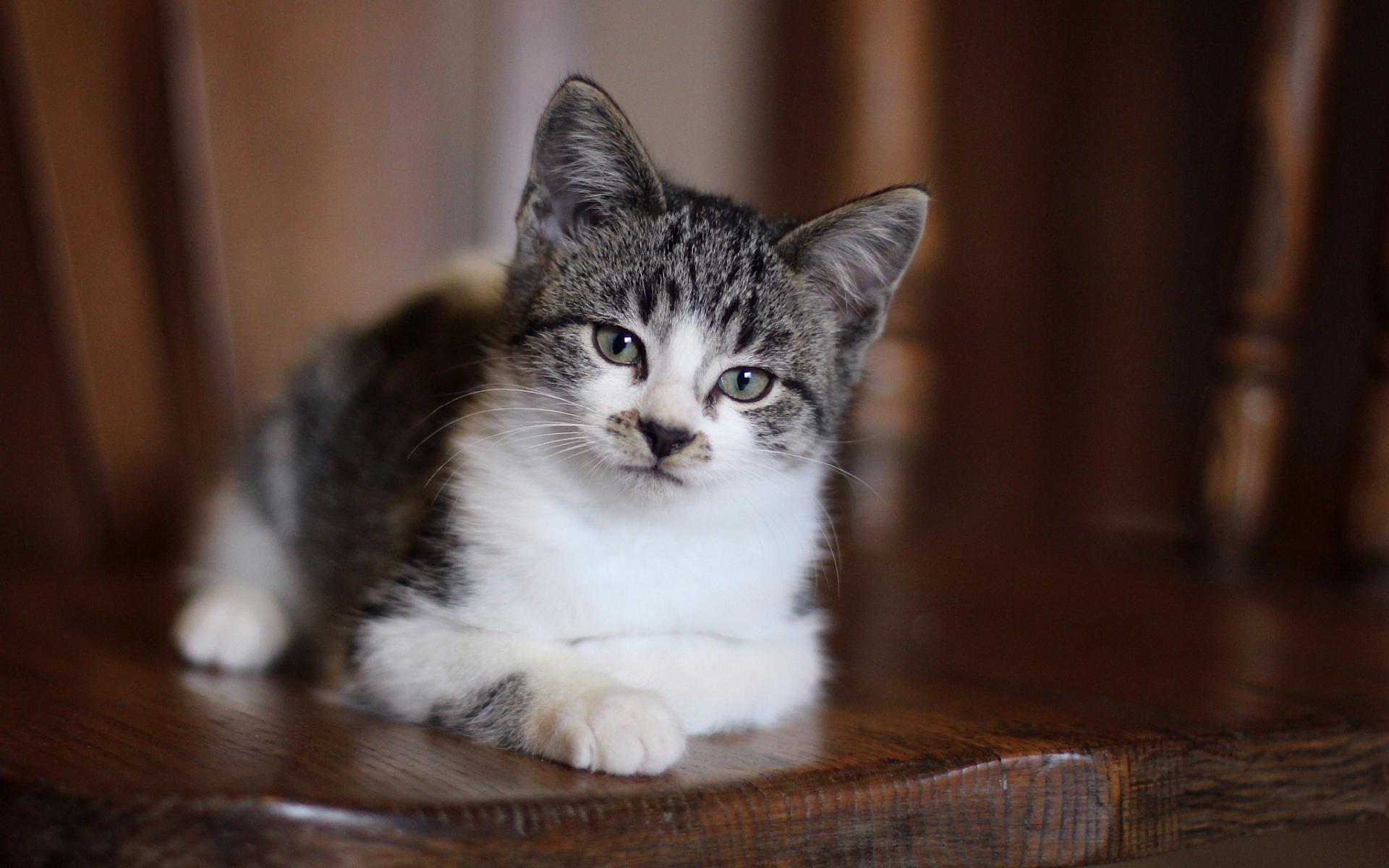 Download Cute Baby Wallpapers Free Cat Cute Basket Hd Desktop Wallpapers 4k Hd