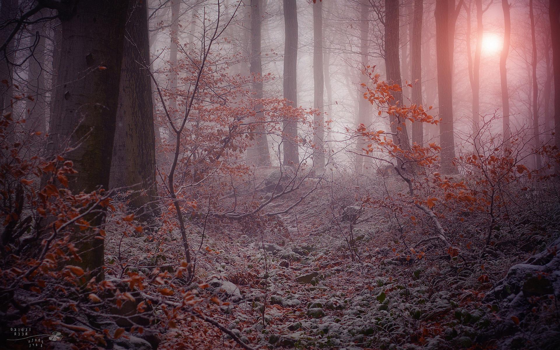 Mystical Fall Desktop Wallpaper Forest Winter Images Hd Desktop Wallpapers 4k Hd