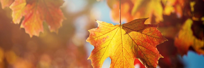 Cute 3d Flower Wallpaper Maple Leaf Autumn Picture Hd Desktop Wallpapers 4k Hd
