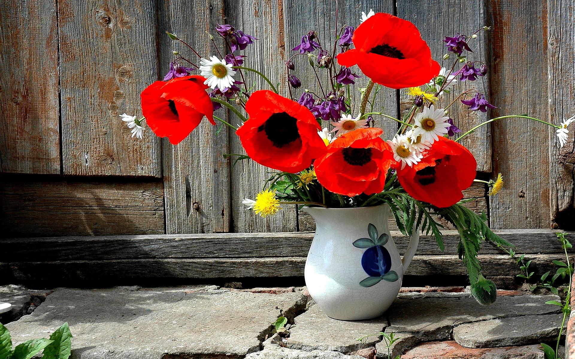 Poppies Beautiful HD Desktop Wallpapers 4k HD