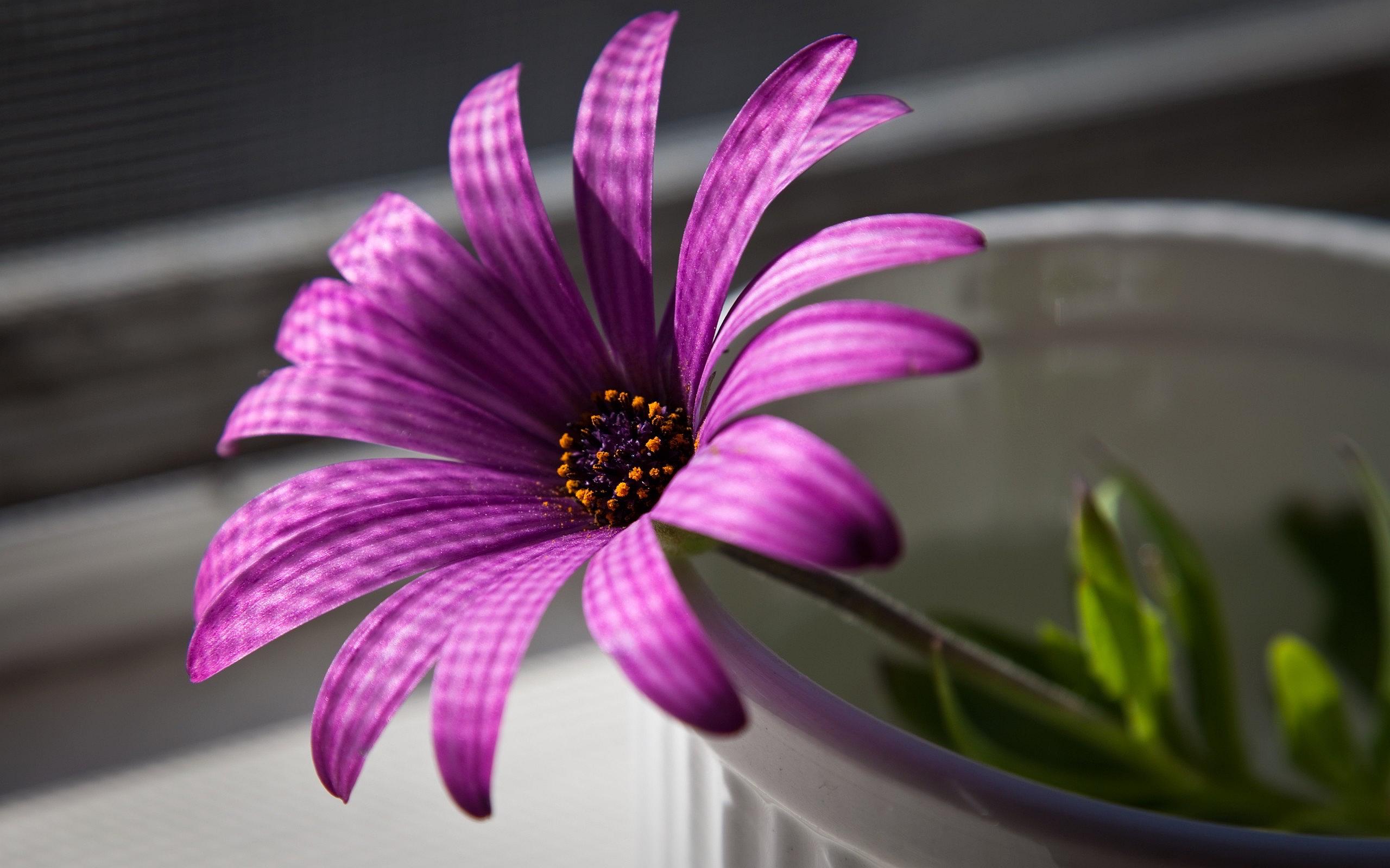 Cute Cool Wallpapers Free Purple Pink Tulips Hd Desktop Wallpapers 4k Hd