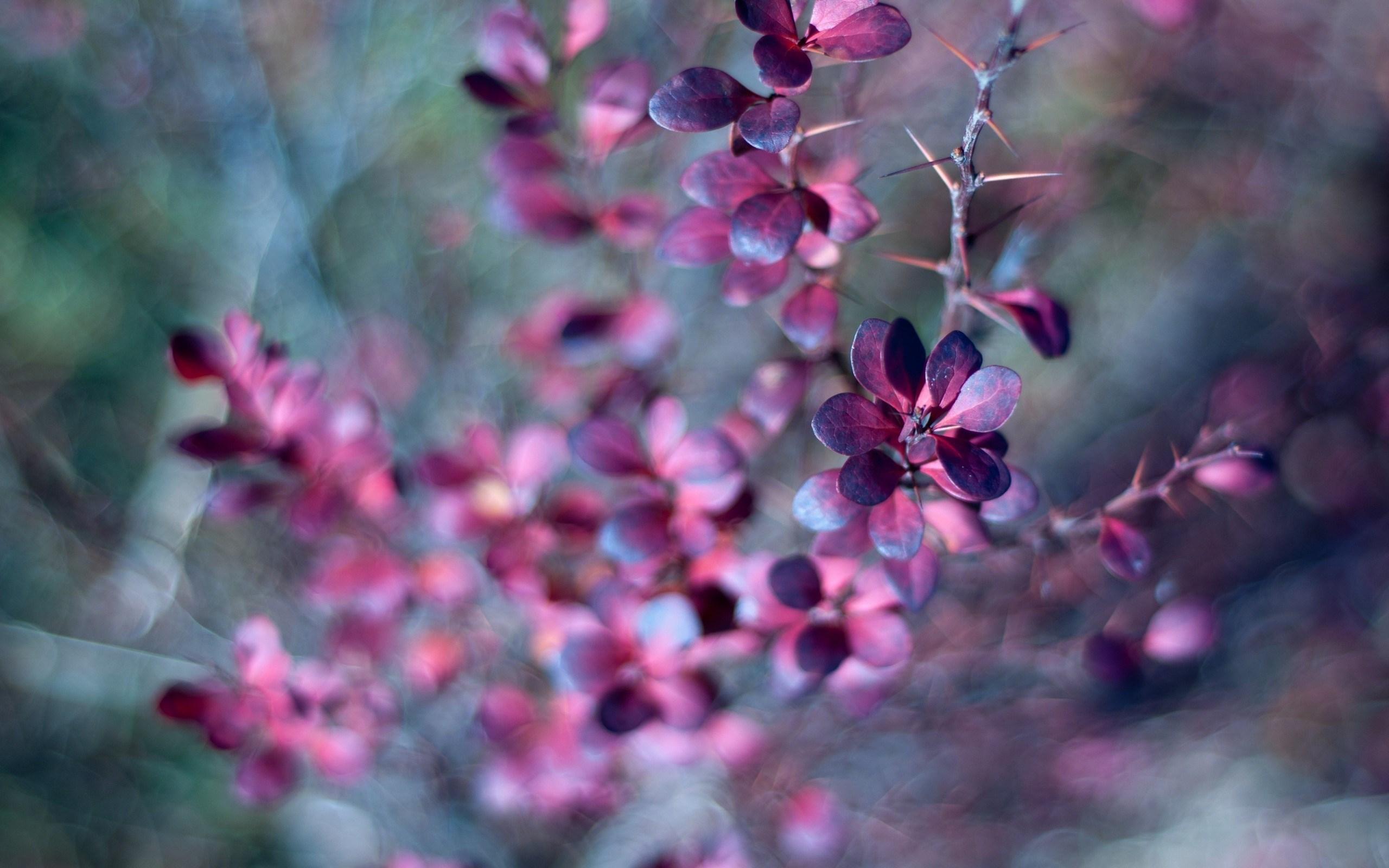 3d Screensavers Wallpaper Free Download Thorn Leaves Purple Forest Hd Desktop Wallpapers 4k Hd