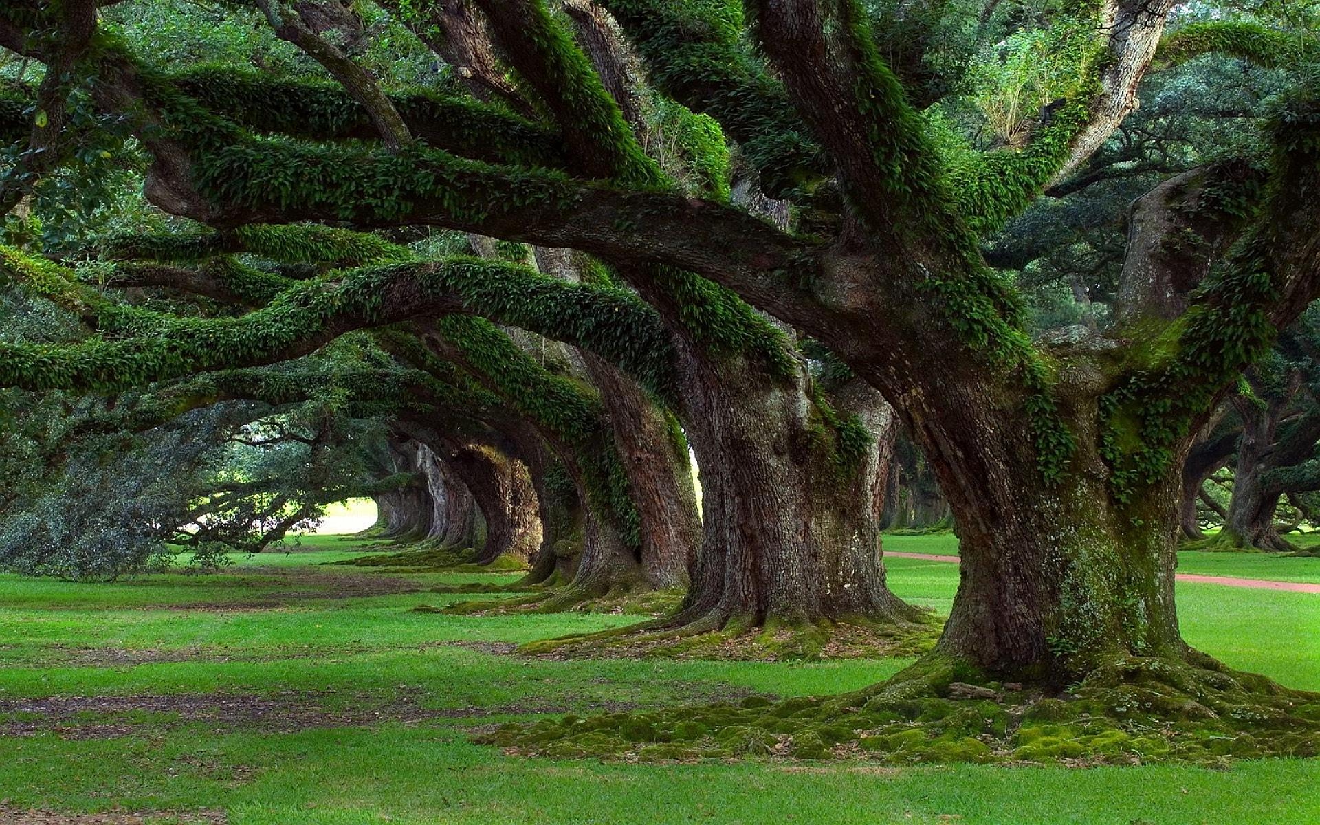 tree pictures moss  HD Desktop Wallpapers  4k HD