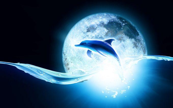 Cute Sea Turtle Wallpaper Animated Dolphin Wallpaper Hd Desktop Wallpapers 4k Hd