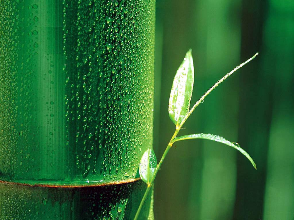 bamboo wallpaper a2 hd