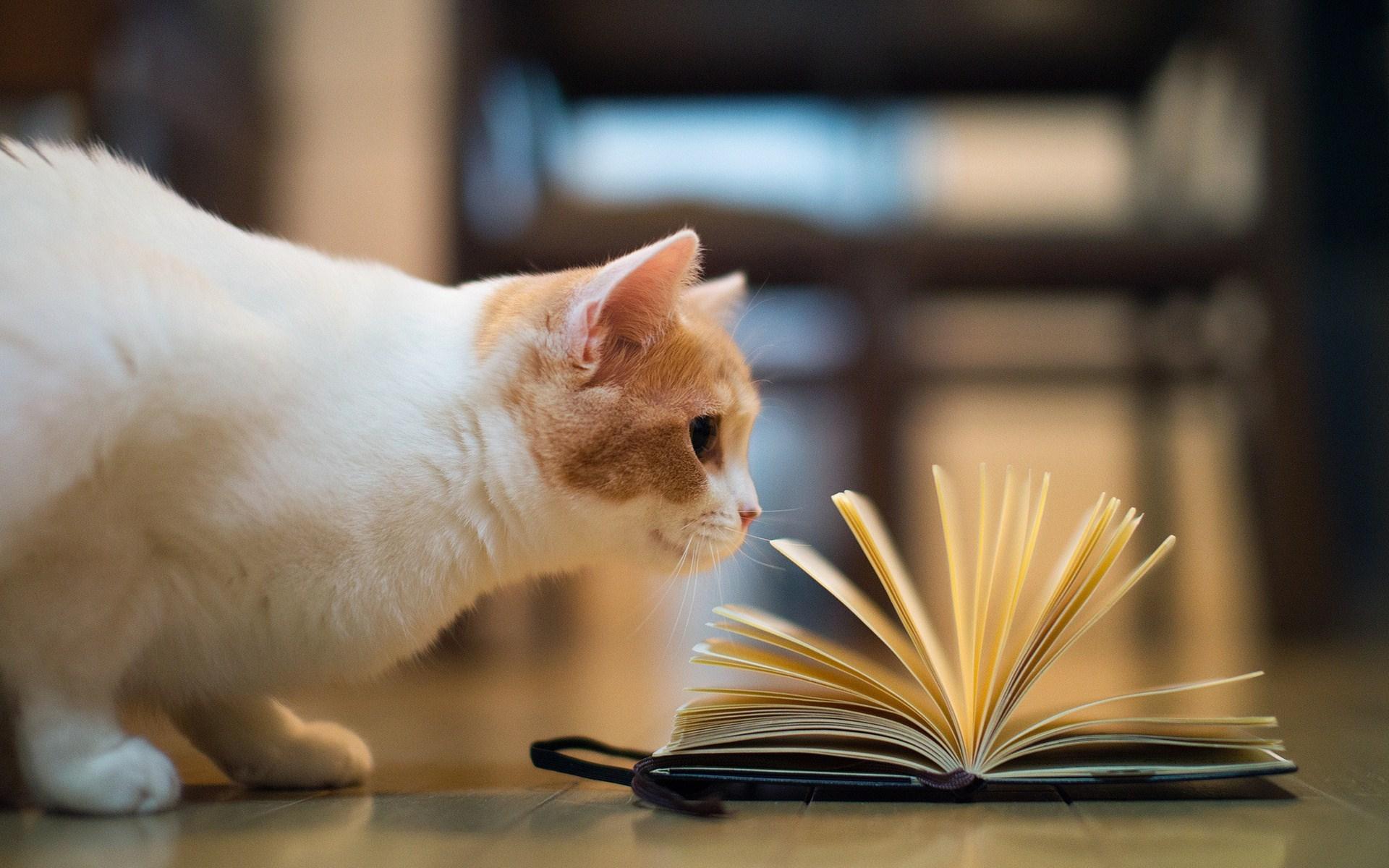 Cute Live Wallpaper Download Cat Books Hd Desktop Wallpapers 4k Hd