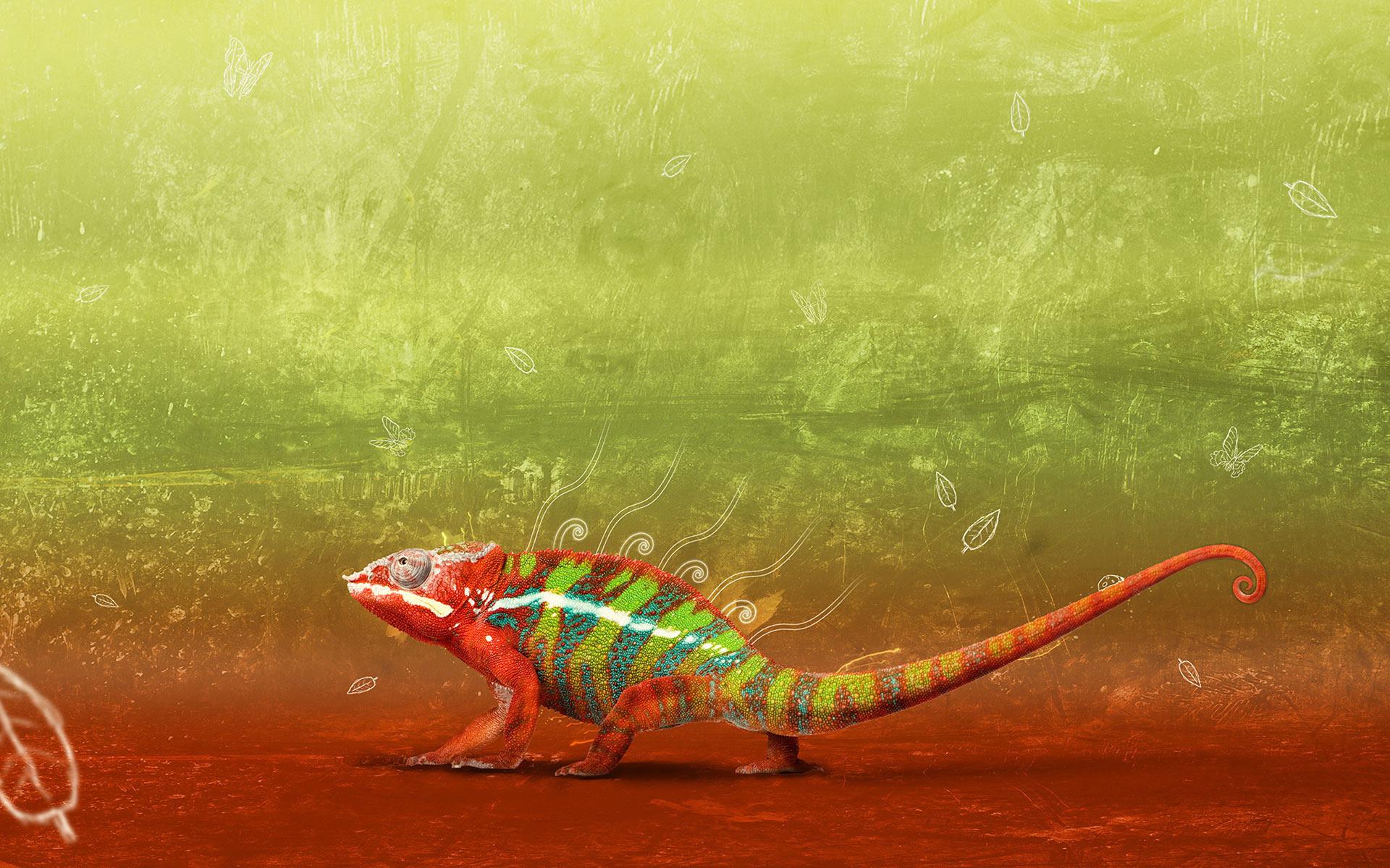 Cute Animal Wallpapers Free Download Chameleon Wallpaper Hd Desktop Wallpapers 4k Hd