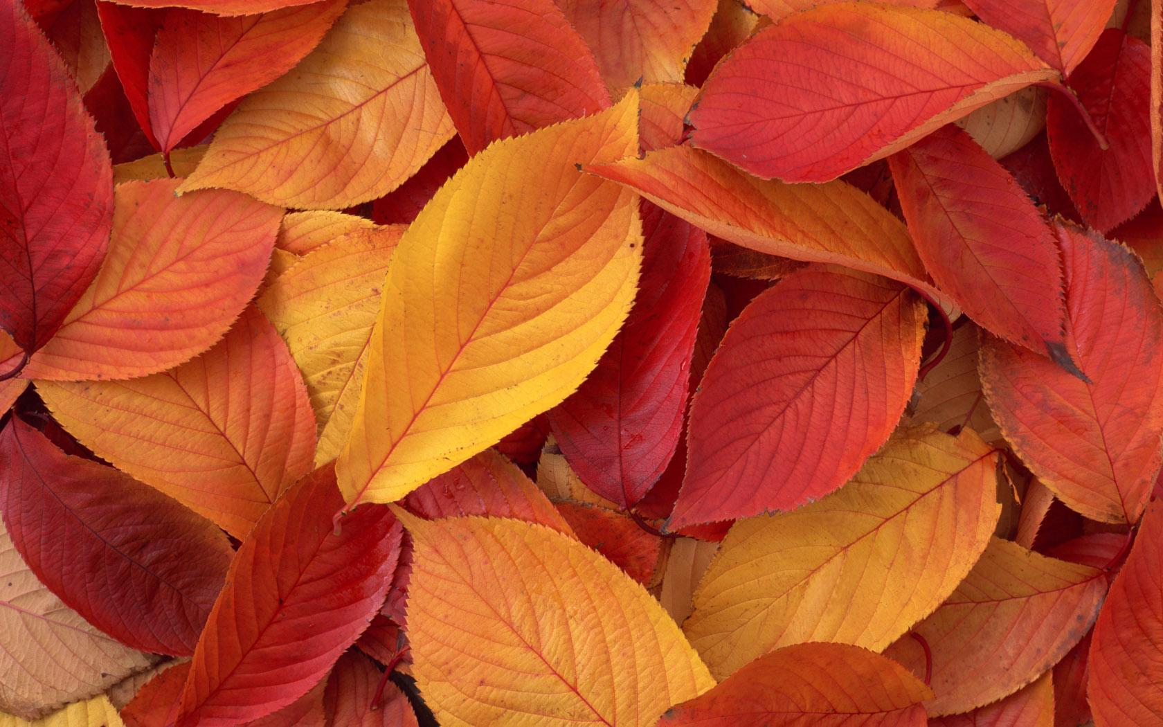4k Fall Painting Wallpapers Fall Scenes Images Hd Hd Desktop Wallpapers 4k Hd
