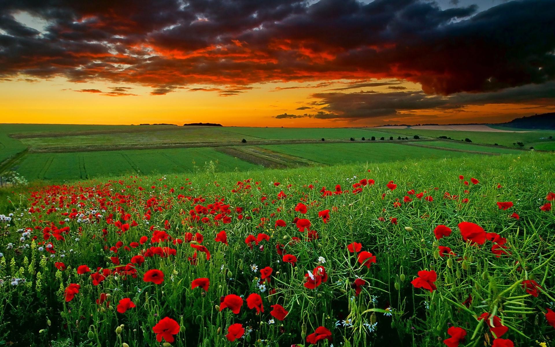 field sunset hd  HD Desktop Wallpapers  4k HD