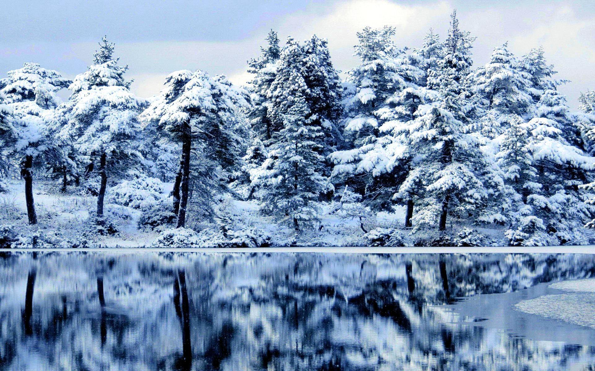 Download Free 3d Live Wallpaper For Windows Xp Forest Wallpaper Snow Winter Hd Desktop Wallpapers 4k Hd