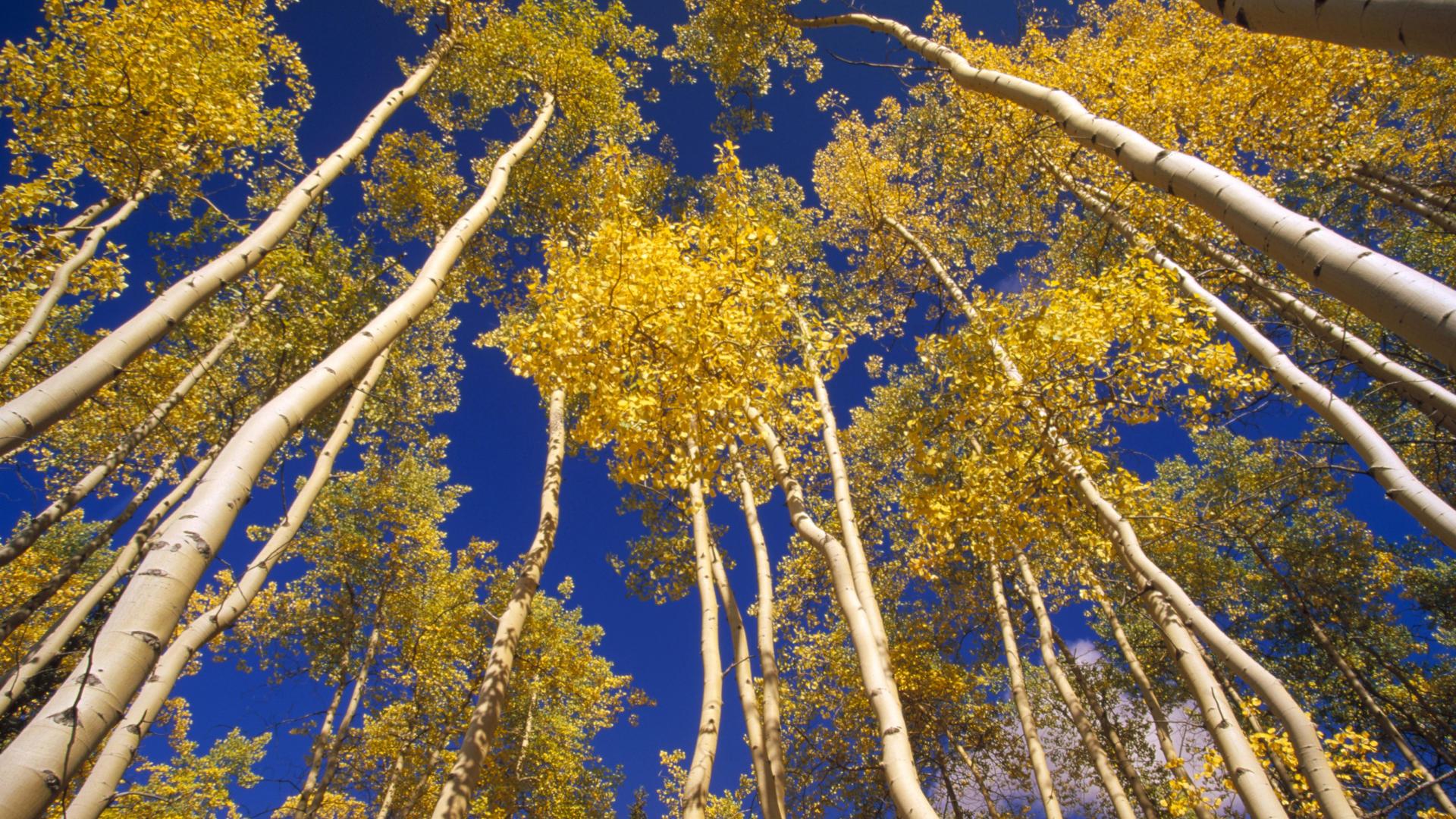 Fall Wallpaper Screensavers Forest Wallpaper Trees Hd Desktop Wallpapers 4k Hd