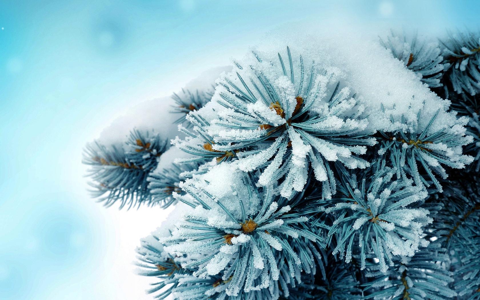 3d Flowers Live Wallpaper Hd Frosty Wallpaper Alaska Hd Desktop Wallpapers 4k Hd