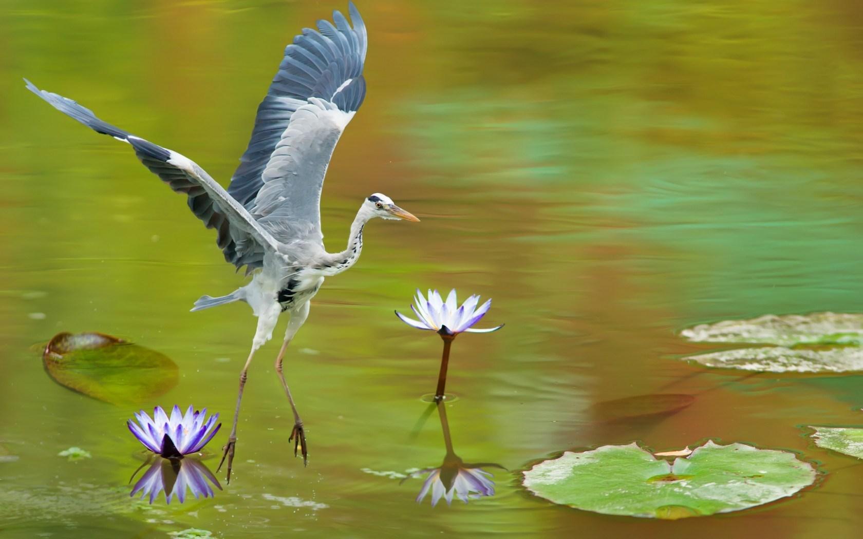 Heron Wallpaper HD Desktop Wallpapers 4k HD