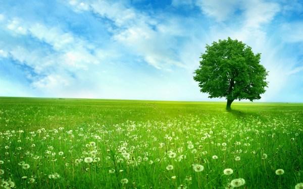 landscape free green - hd desktop