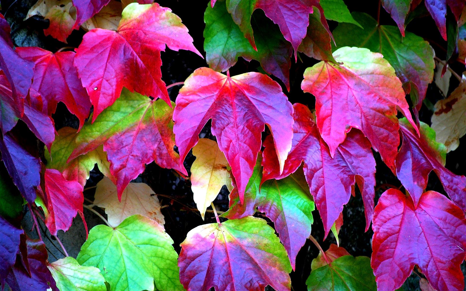 Autumn Falling Leaves Live Wallpaper Leaves Colors Hd Desktop Wallpapers 4k Hd
