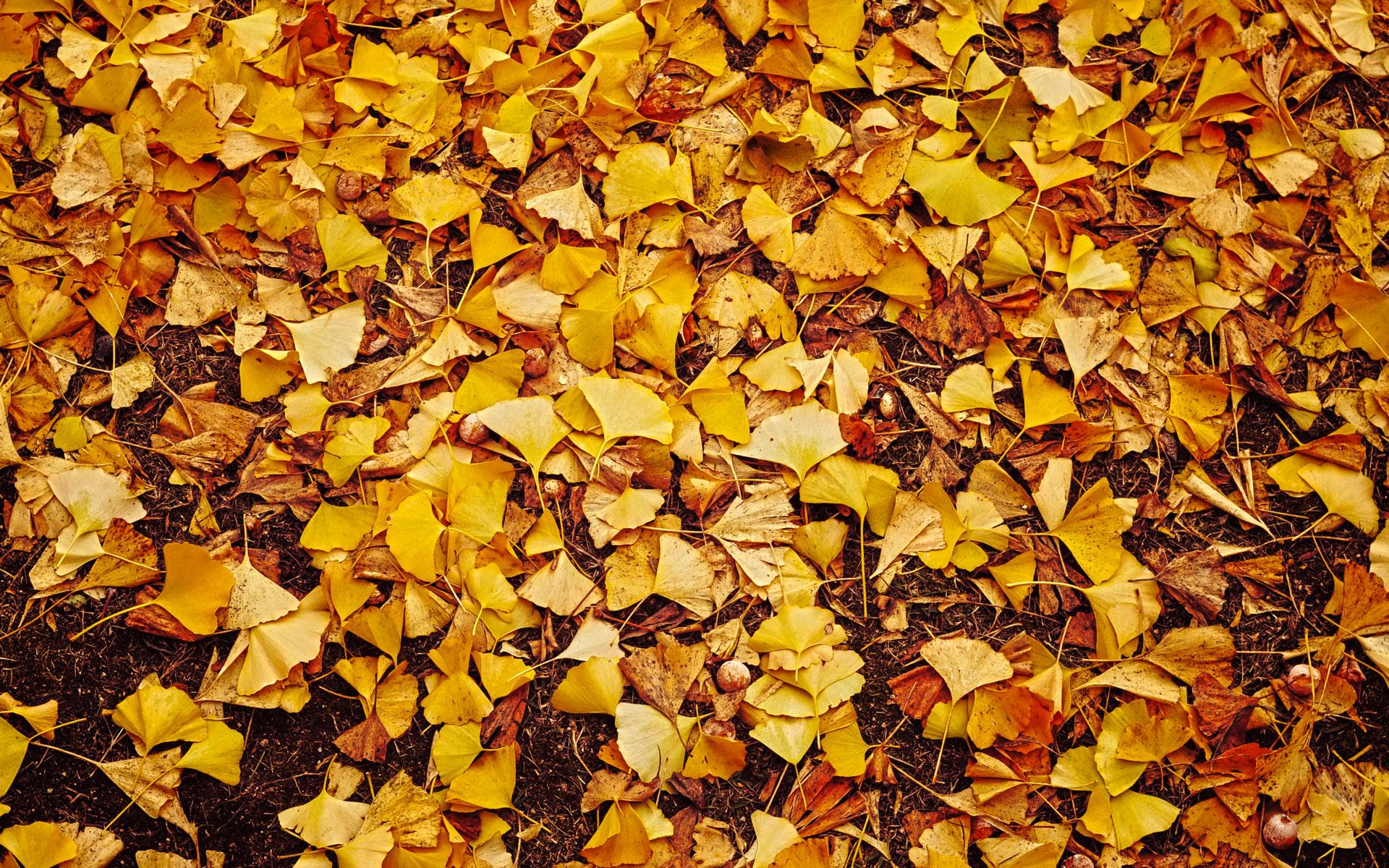 Fall Themed Wallpaper Desktop Leaves Yellow Hd Desktop Wallpapers 4k Hd