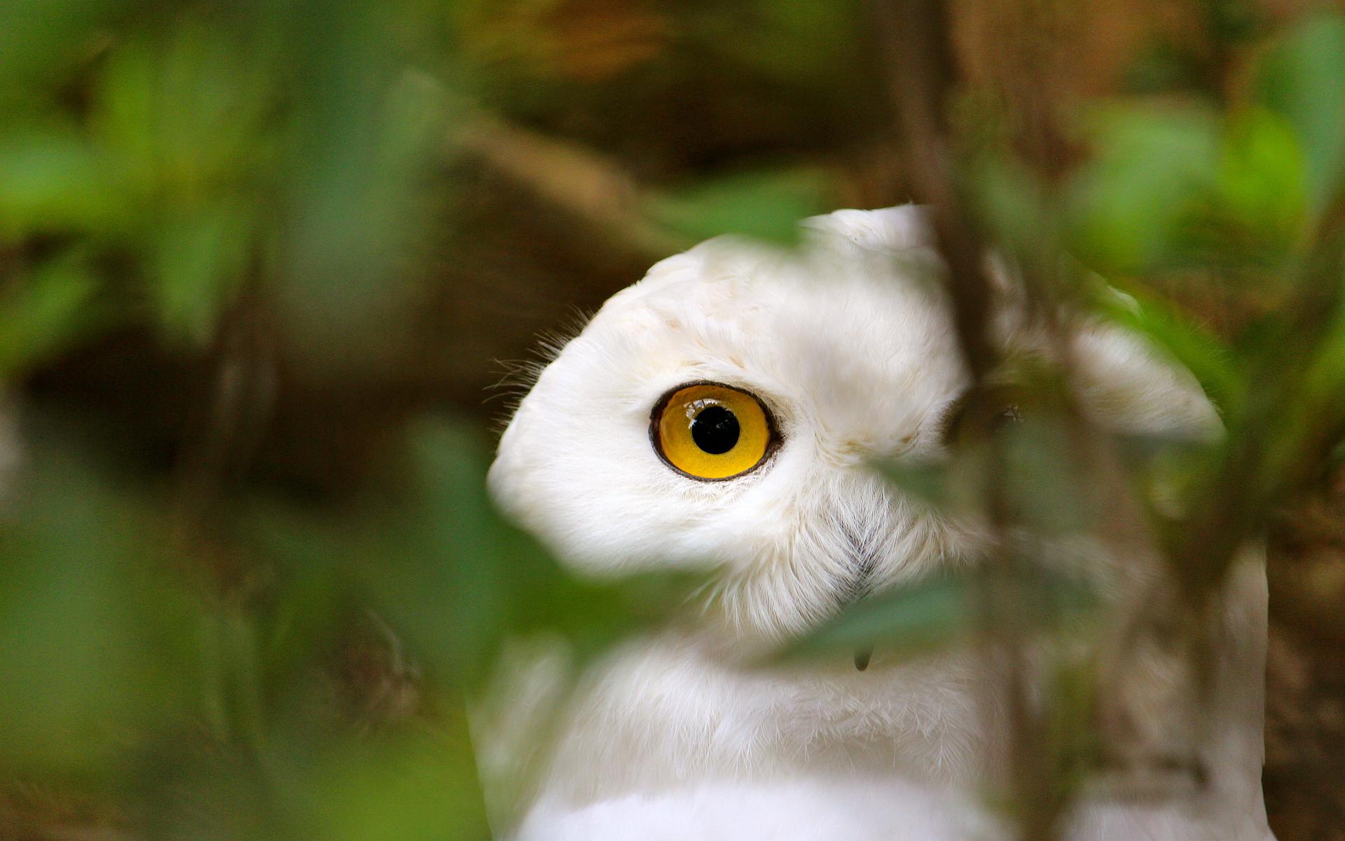 Cute Kitty Wallpapers Free Owl A9 Hd Desktop Wallpapers 4k Hd