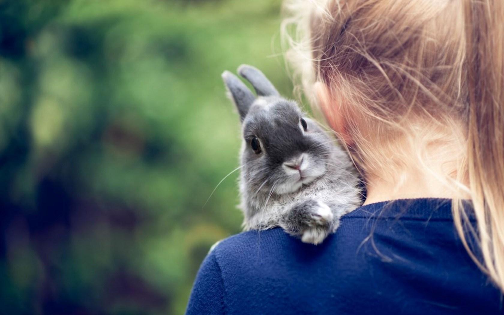 Cute Rabbit Wallpapers For Desktop Rabbits Hd Wallpaper Hd Desktop Wallpapers 4k Hd