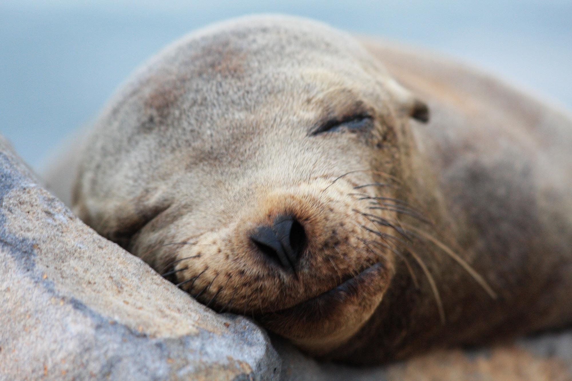 Cute Baby Seals Wallpapers Seal Fish Pictures Hd Desktop Wallpapers 4k Hd
