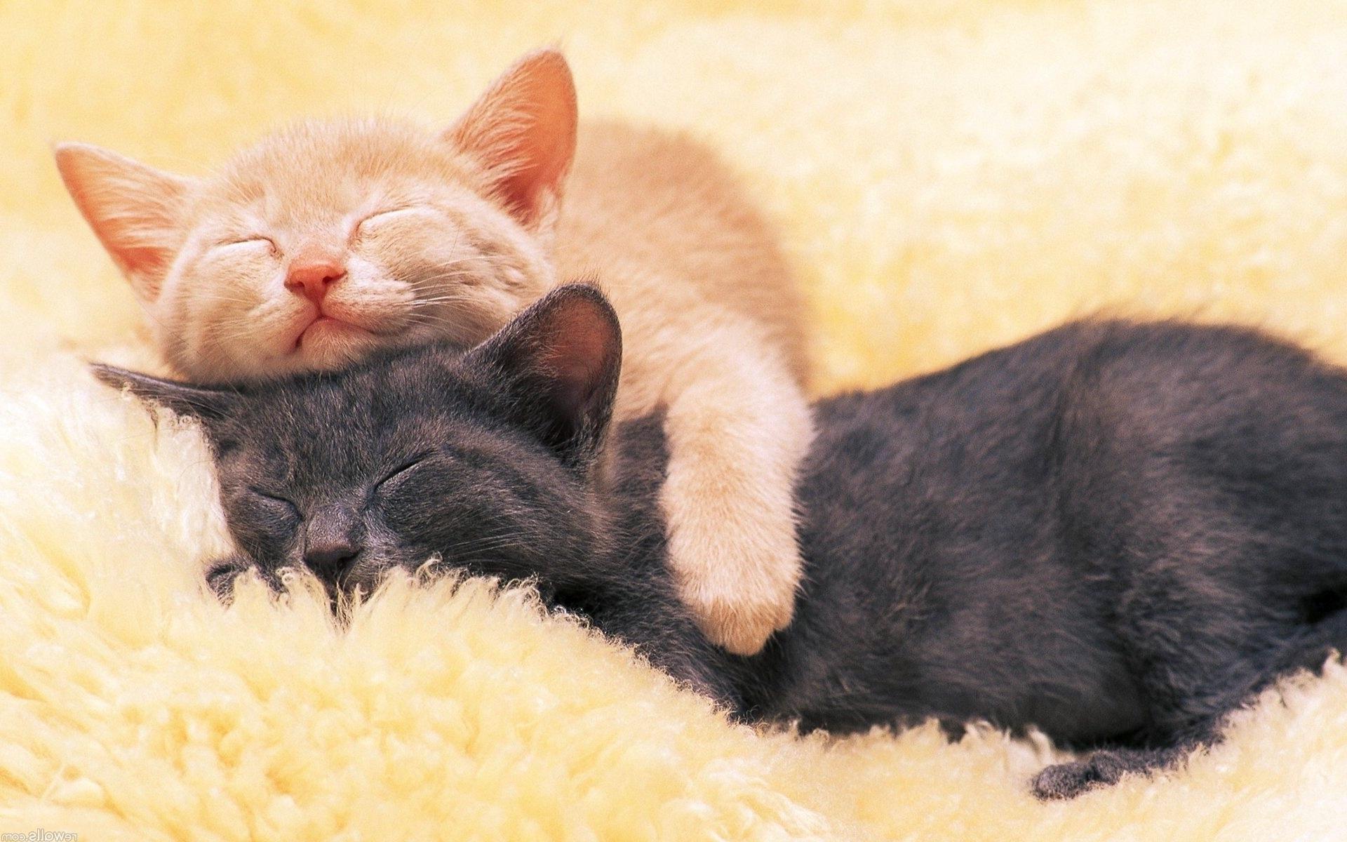 3d Name Live Wallpaper Download Sleeping Cats Hd Desktop Wallpapers 4k Hd