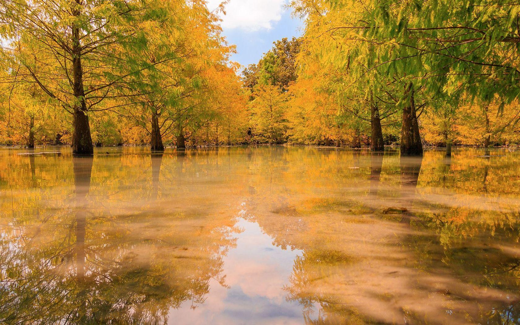 Free Fall Wallpaper With Animals Swamp Wallpaper Autumn Fall Hd Desktop Wallpapers 4k Hd