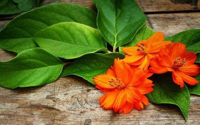 Cute Live Wallpaper Download Tangerine Flower Hd Desktop Wallpapers 4k Hd