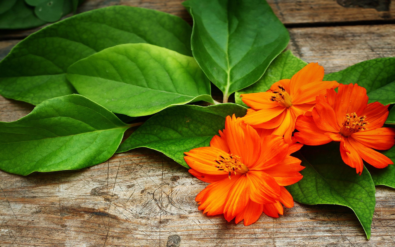 Tangerine Flower HD Desktop Wallpapers 4k HD