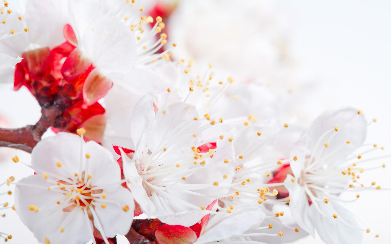 Falling Rose Petals Live Wallpaper Flower Petals Hd Hd Desktop Wallpapers 4k Hd