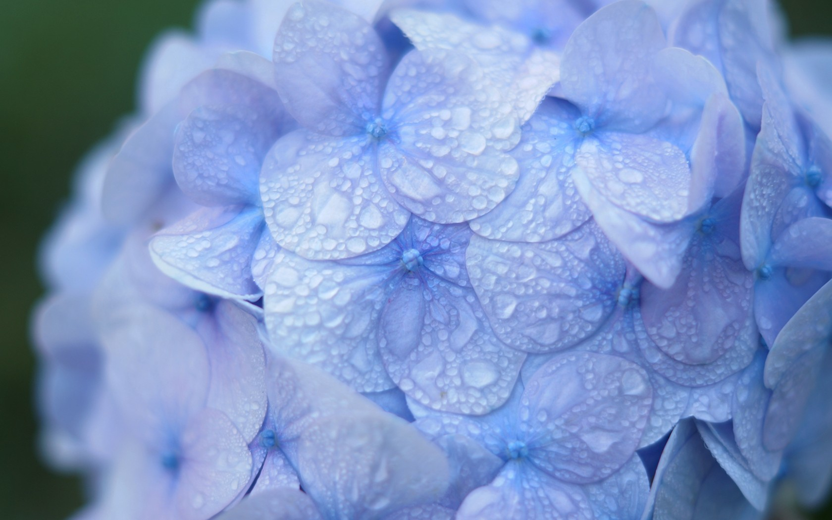Cool 3d Love Wallpapers Hydrangea A2 Hd Desktop Wallpapers 4k Hd